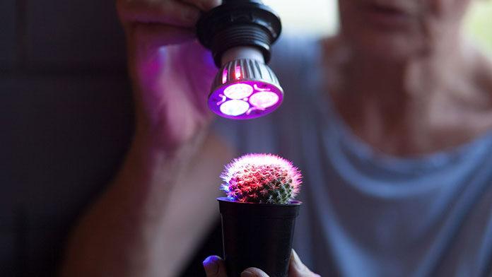 Bardzo nowoczesne lampy do uprawy roślin